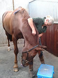 Equine physio session