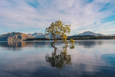 The Lone Tree | Lake Wanaka, New Zealand