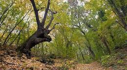 NaturparkSlatni Pjassazi Bulgarien