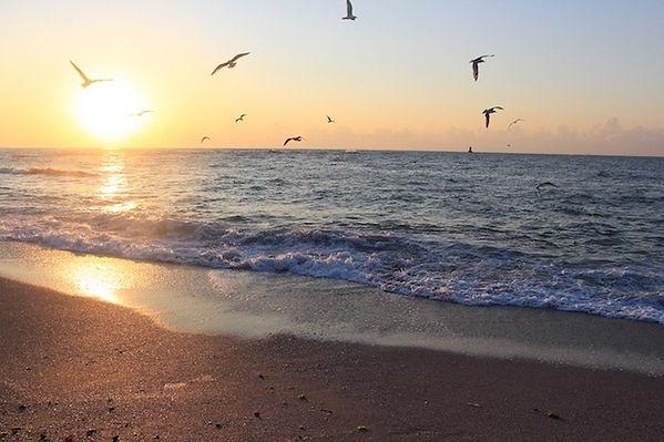 Möwen fliegen Meer beim Sonnenuntergang über das Meer und den Strand von Bulgarien