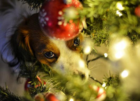 Wir wünschen allen ein besinnliches Weihnachtsfest