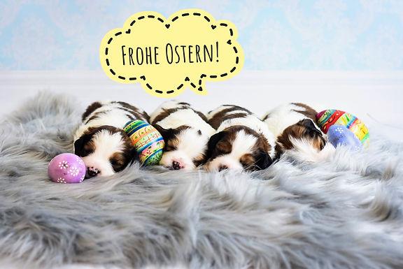 Die kleinen Avengers und das Rudel wünschen frohe Ostern!