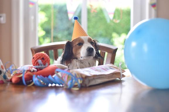 06.07.2018 - Becks feiert seinen 4. Geburtstag!