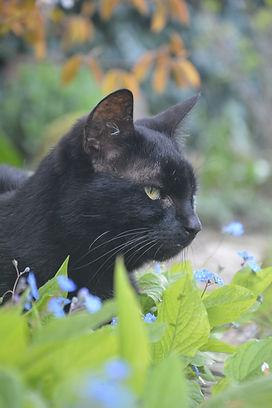 Katze, Katze schwarz, Sissy