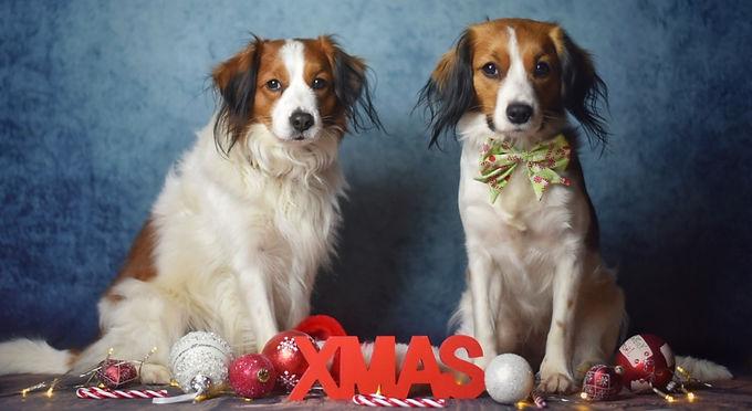 Wir wünschen allen eine schöne Weihnachtszeit!