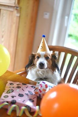 06.07.2020 - Becks hat heute bereits seinen 6. Geburtag gefeiert!