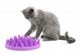 Catch - comedero interactivo gatos