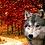 Thumbnail: Receta pavo - Pienso para perro