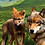 Thumbnail: Receta cordero (Sensitive) - Pienso para perro