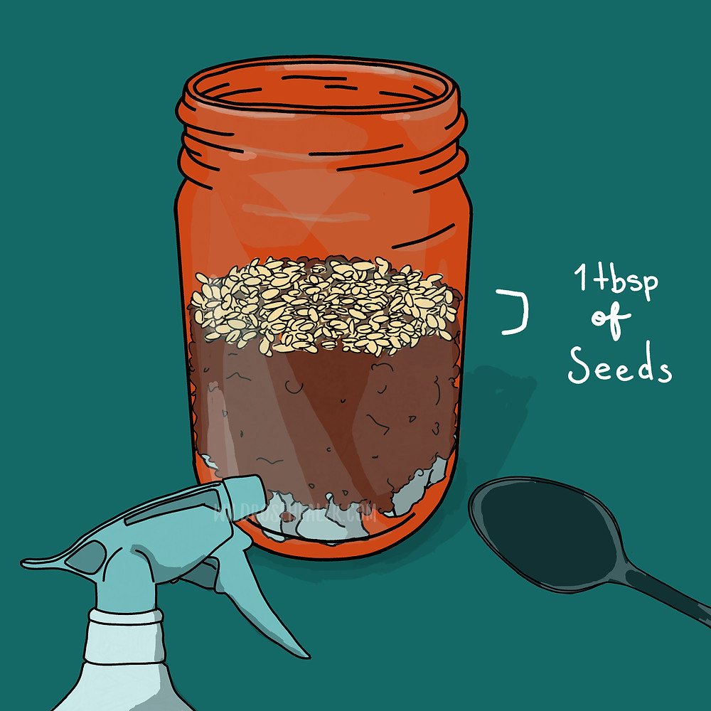 For step 4 it's time to plant your wheatgrass seeds