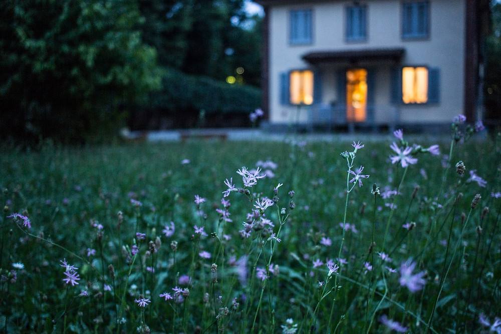 house, home, flowers, weeds, field, grass, plants, harvest, forage, botanical