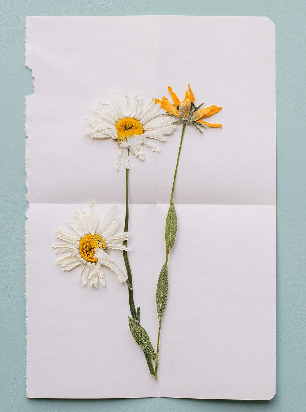 flowers, pressed flowers, botanicals, journals