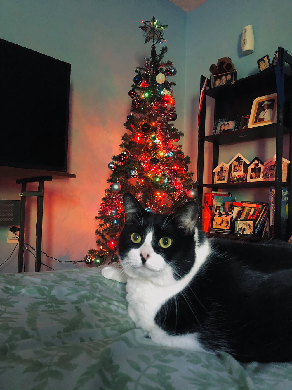 Cat posing with the christmas tree