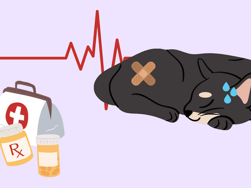 HOW TO IDENTIFY WHEN YOUR CAT IS SICK