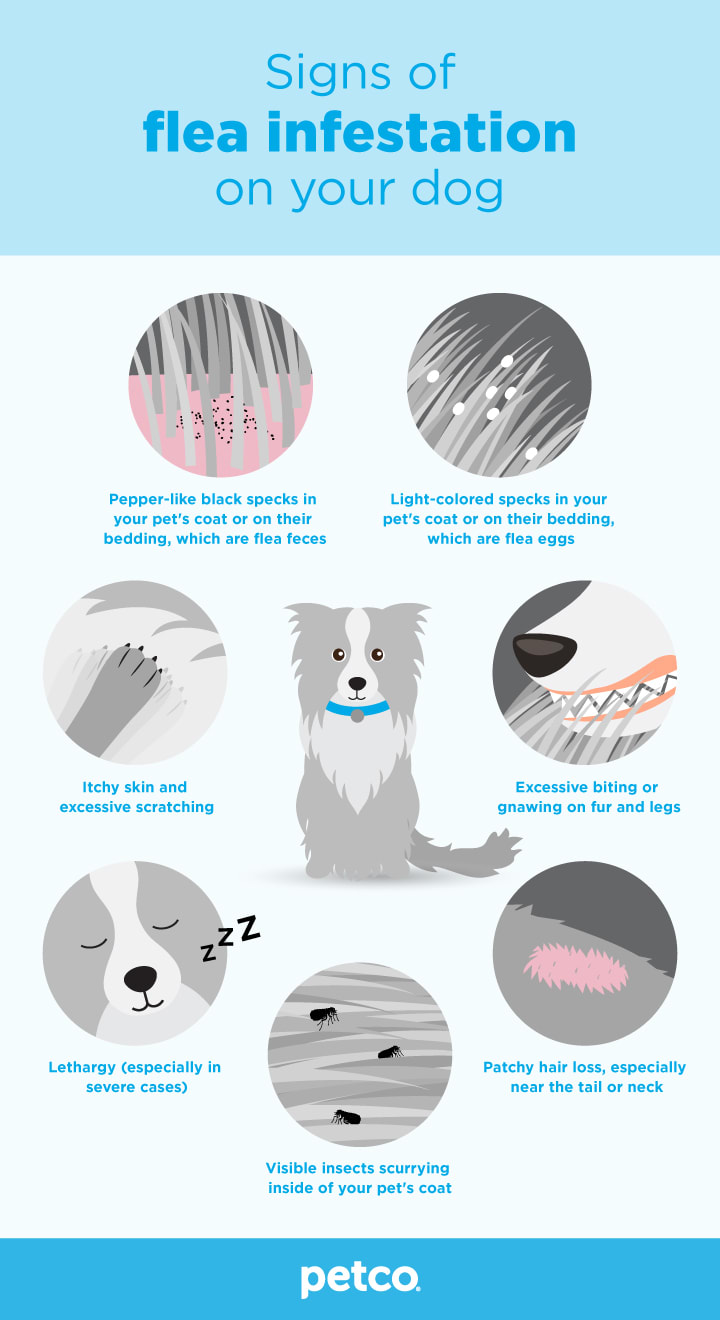 Signs of fleas infestation on your dog