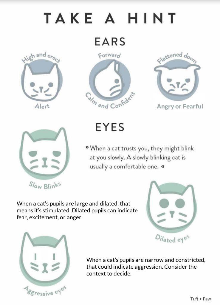 Common cat body language