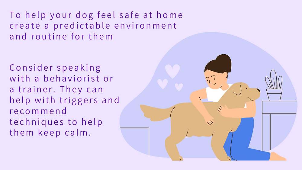 How to help ease your shelter/rescue dog's anxiety