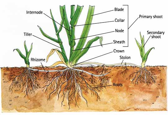 plants root system , harvesting, wild plants.