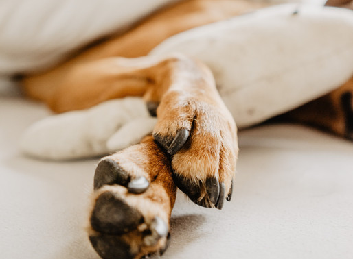 WHAT YOU NEED TO KNOW ABOUT YOUR DOG'S PAW HEALTH.