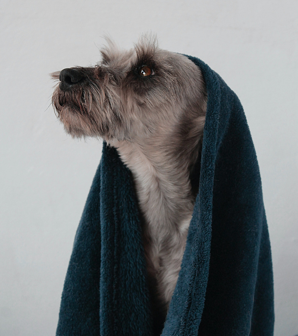 A dog after a shower during the cold weather