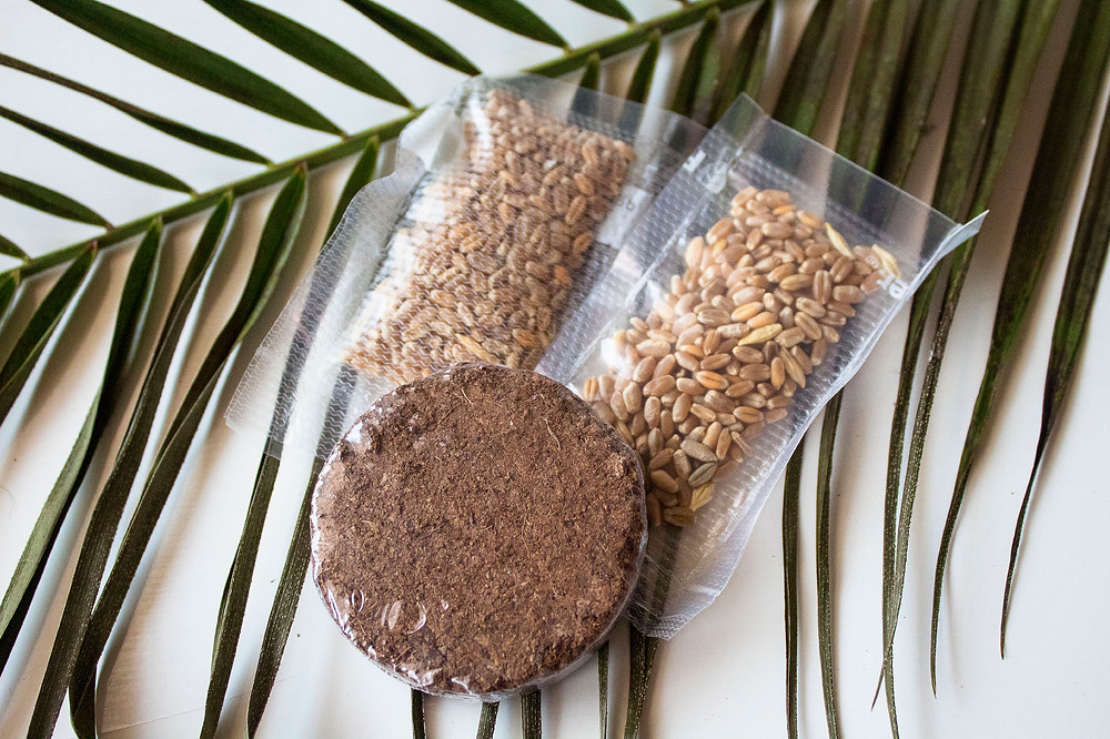 Wheatgrass blend of seeds (2 batches) and soil to grow your own wheatgrass for your pet