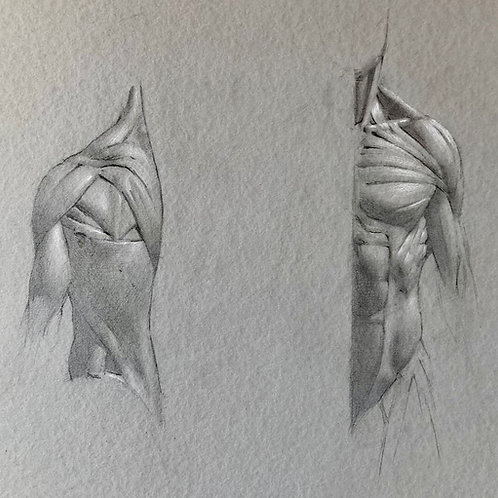Taller Anatomía para Artistas