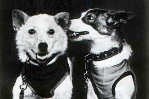 Dezik and Tsygan, Space Dogs (Source: Quora)