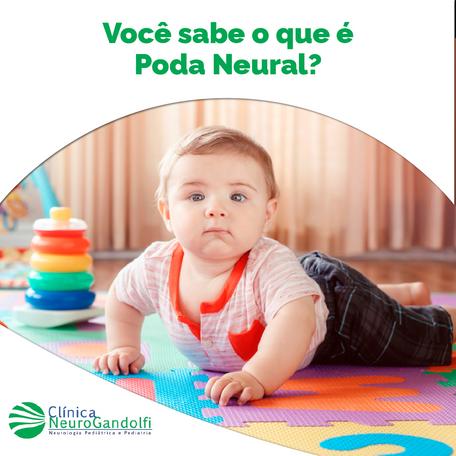 Você já ouviu falar da poda neural?