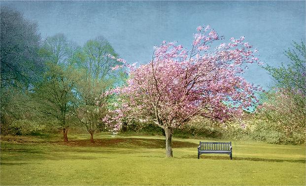 Blosssom Bench.jpg