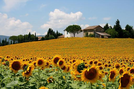 5 Unique Experiences in Italy