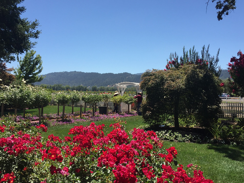 The beautiful grounds at Nickel and Nickel winery, Napa Valley, California.