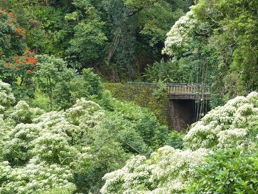 Beautiful scenery on the Road to Hana, Maui, HI