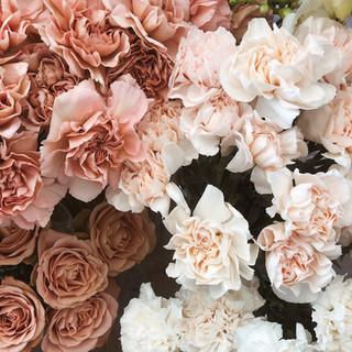 Floribunda flowers