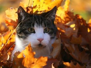 L'automne est là, boostez leur immunité!
