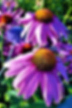 flowers-2949691__340.jpg