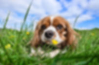 dog-2785072_960_720.jpg