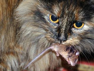 Idées reçues n°1 : Mon chat / chien a besoin de glucides dans son alimentation