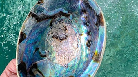 Abalone Shell, Smudge Bowl, Sea Shell, Ash Catcher, Water Element, House Smudgin