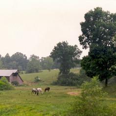 sheep hearder farm reference