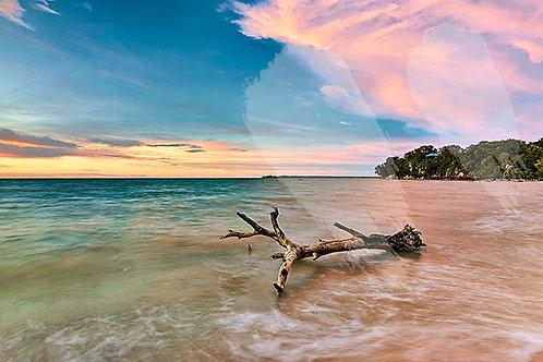 Driftwood on Mindil Beach