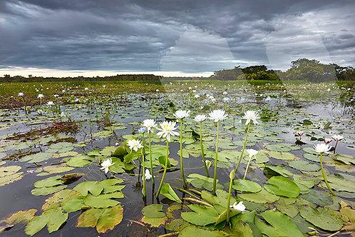 Yellow Water Storm - Kakadu National Park
