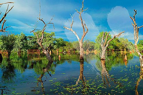 Johnston's Lagoon - Dunmara