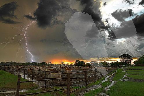 Cattle Yard Storm