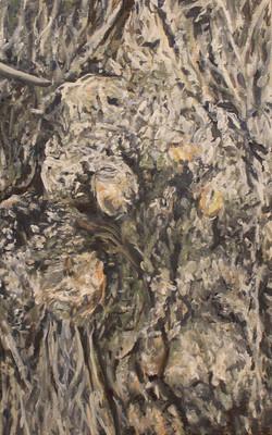 Tree Trunk (Close Up)