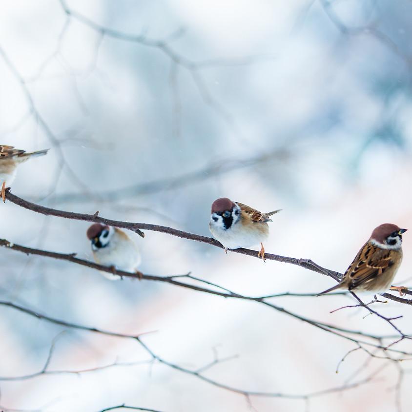 Kim Rreitinger - Birding for Good