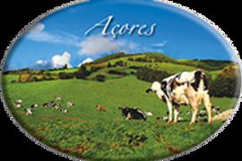 Íman oval 45x65 | Açores 10 | embª12