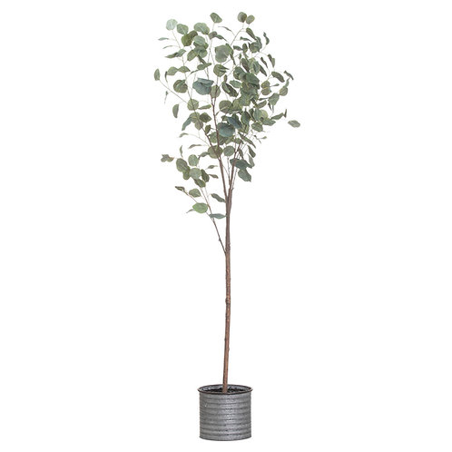 Large Eucalyptus Tree In Metalic Pot