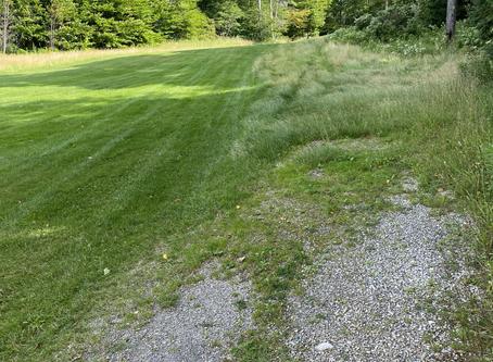 The Grassy Void
