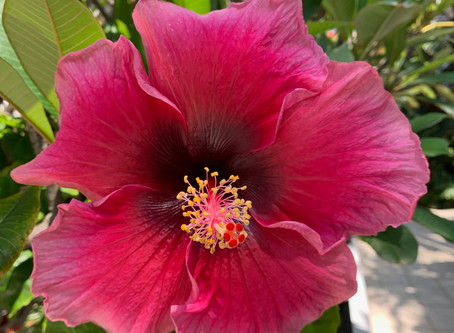 SPA TRAVEL: The Hibiscus in Full Bloom at the Oyster Box Spa, Durban South Africa