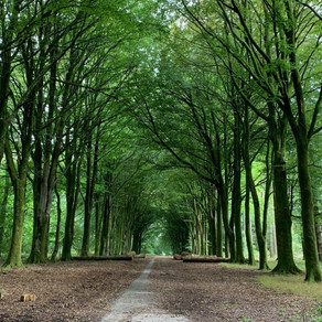 UK: Apparitions and Alchemists, Just Another Walk in the Wiltshire Woods